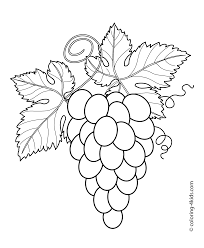 grapes with leaves fruits and berries coloring pages for kids