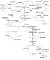 galactose wikipedia