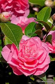 68 best oregon flower gardens images on pinterest flower beds
