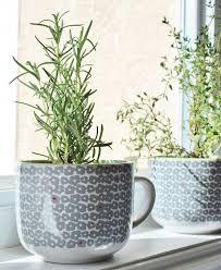 Diy Herb Garden 5 Recycled Diy Herb Gardens U2014 Eatwell101