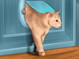 how to give your cat space to sunbathe 7 steps with pictures