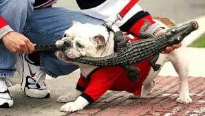 Georgia Bulldog Memes - the top 10 best blogs on florida vs georgia