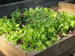 backyard vegetable garden design courses the garden inspirations