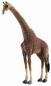 Giraffe Floor L Giraffes For