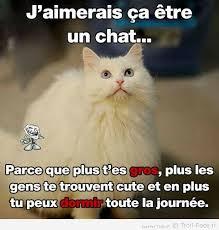 Meme Chat - l avantage d être un chat random pinterest humour