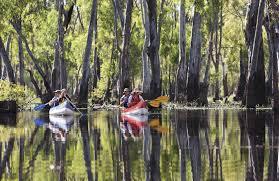 native plants nsw river red gum australian native plants nsw national parks