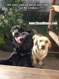 Dog Bacon Meme - bacon dog new trending popular memes 9 13 2014 clean memes
