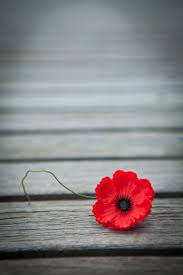 the importance of remembrance day childventures