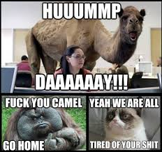 Funny Fuck You Memes - hump day is pissing off the rest of the animals funny meme funny memes