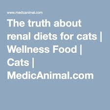 the truth about renal diets for cats wellness food cats