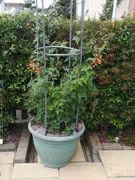 climbers or trailers gardening forum gardenersworld com