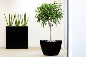 artificial plants make artificial plants look more realistic phs greenleaf