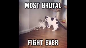 Cat Fight Meme - most brutal catfight youtube