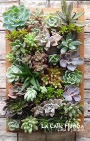 succulent wall garden plant life pinterest succulent wall