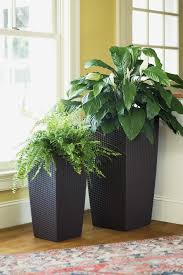 exciting indoor plants planters design with a modern silhouette