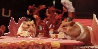 thanksgiving with friends tiny hamster enjoys eensy weensy thanksgiving feast with friends
