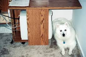 american eskimo dog tricks amaze your friends with simple new dog tricks the dog guide