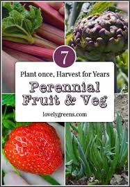 perennial fruit and vegetables plant once and then harvest for years