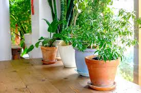 light houseplants to care for indoor plants the easiest grow in