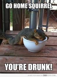 Dead Squirrel Meme - drunk squirrel cute animals pinterest drunk squirrel