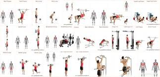 gain fitness online strong dynamic muscular ardent