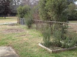 our side yard garden makeover bonnie plants