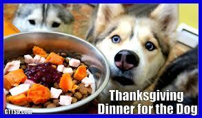 diy thanksgiving dinner for dogs diy treats snow snacks