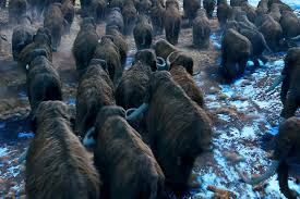 herd migrating woolly mammoth movie 10 000 bc