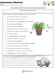 asexual vs sexual reproduction handout to go with our amoeba