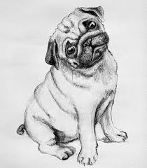 66 best animals images on pinterest dogs cute pugs and pug dogs