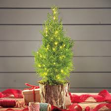 furniture design decorated tabletop christmas trees