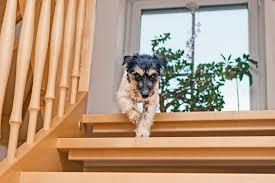 rutschschutz treppe transparente treppenfolie sorgt für sehr guten grip auf den stufen