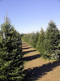 start a family tradition u2026 picking out the perfect christmas tree