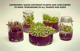 how to create a terrarium home interiror and exteriro design