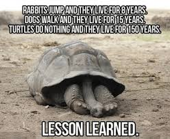 Funny Turtle Memes - search results for tag turtle