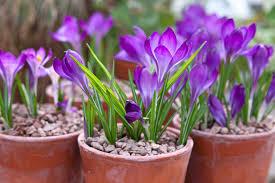 10 scented climbing plants to grow gardenersworld com