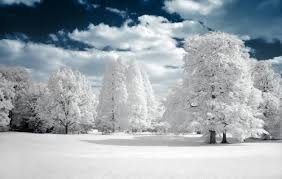 50 most beautiful tree photos creativefan