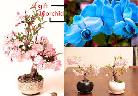 Gift Tree Free Shipping Online Get Cheap Gift Tree Aliexpress Com Alibaba Group