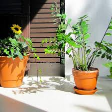 gallery of balcony gardening ideas catchy homes interior design