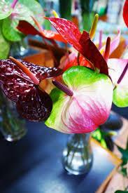 Girls Favourite Flowers - 351 best flowers belfast images on pinterest belfast mother u0027s