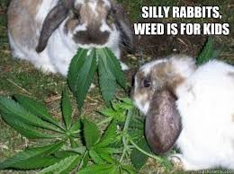 Silly Rabbit Meme - silly rabbits weed is for kids silly rabbits quickmeme