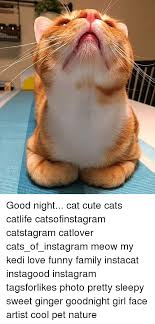 Goodnight Meme Cute - 25 best memes about good night cat good night cat memes
