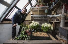 experimental sunken greenhouse in mpls weathers first winter