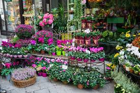 Flowershop Street Flower Shop With Colourful Flowers Stock Photo Colourbox