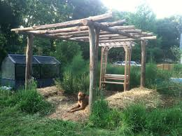 hardy kiwi arbor at garden entrance ecologia design 240 344 5625