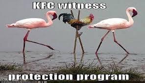 Funny Bird Memes - i can has cheezburger flamingo funny animals online cheezburger