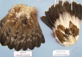 national eagle repository photos