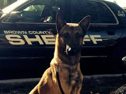belgian malinois in movies beloved police k 9 dies in squad car after ac fails ny daily news