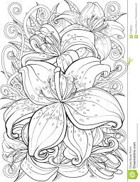 tiger coloring book pages tiger lily stock vector image 67088322