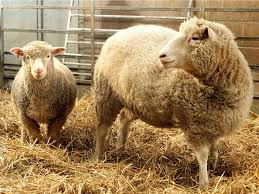 Dolly And Me Clothing Where Dolly The Cloned Sheep Is Now Business Insider
